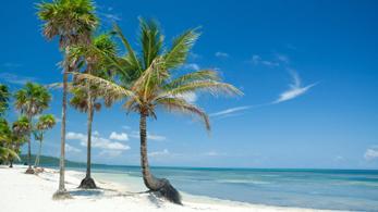 Palmen am Strand der Karibik