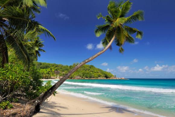 Palmen am Strand des Karibischen Meeres