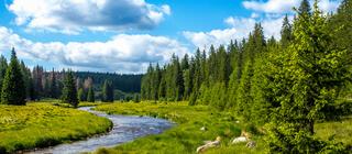Bayerischer Wald Flusslauf