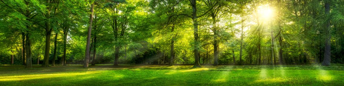 Bayerischer Wald im Sonnenlicht
