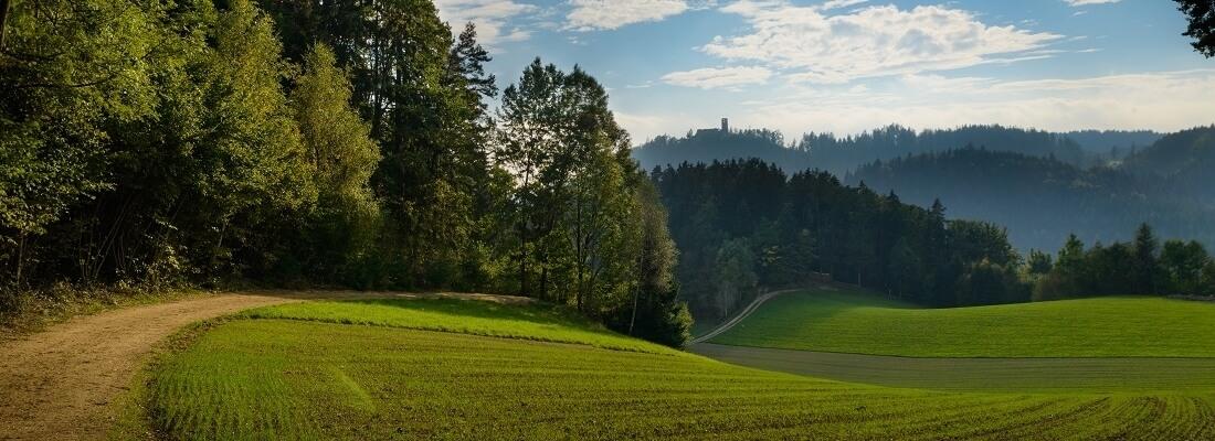 Blick auf einen Wanderweg, Mühlviertel, Österreich