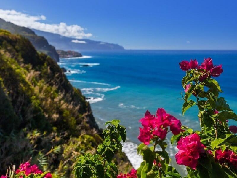 Blick von den Klippen auf das Meer, im Vordergrund Blumen, Maidera