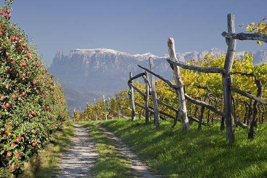 Wanderweg an einer Plantage mit Bergpanorama in Südtirol