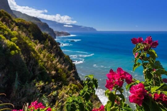 Blick auf die Küste von madeira mit typischen Blumen, Portugal