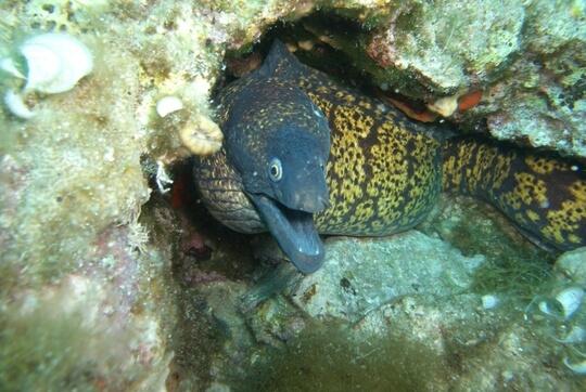 Sardinien Unterwasser