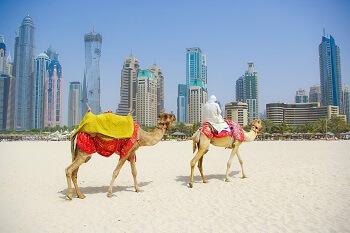 Ein Mann mit Kamelen am Strand von Duba, VAE