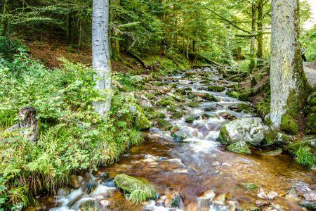 deutschland, Bach im Bayerischen Wald
