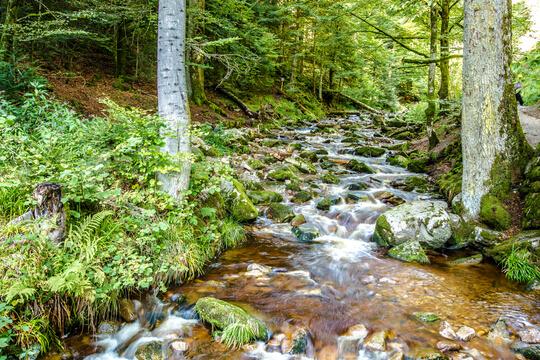 Bach in den Bergen im Schwarzwald, Deutschland
