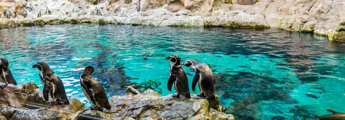 Pinguine im Loro Parque auf Teneriffa, Kanaren, Spanien