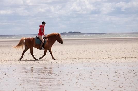 Reiterin beim Wattausritt vor Föhr