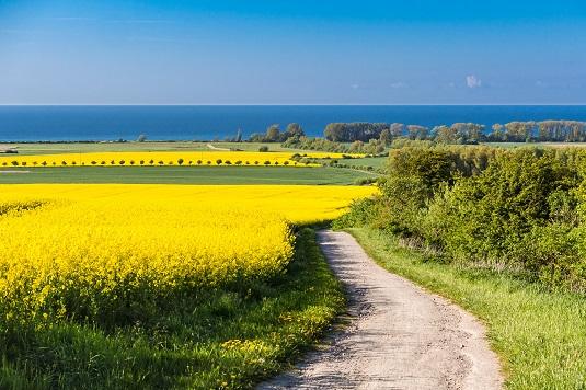 Blick auf blühende Felder und die Ostsee in der Nähe von Kühlungsborn