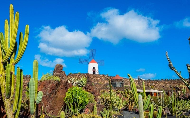 Kaktusgarten vor einer Windmühle auf Lanzarote, Kanaren, Spanien