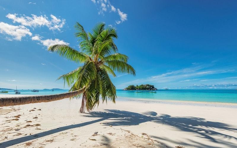 Palme am Strand auf Jamaika